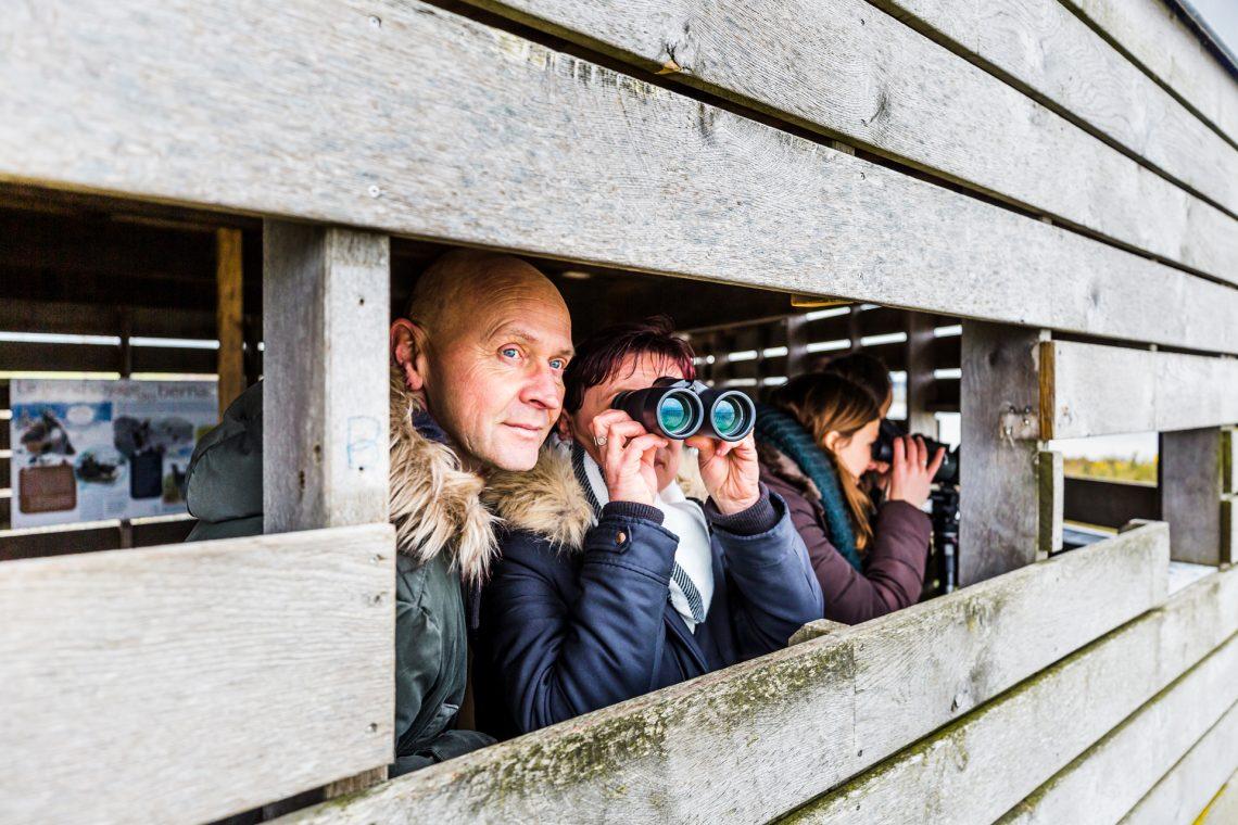 Observation oiseaux Baie de Saint-Brieuc